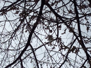 写真 2014-03-26 13 11 19
