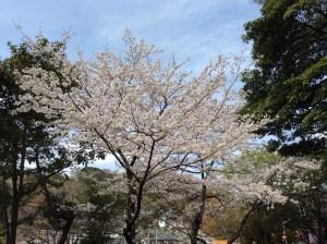 写真 2014-04-02 12 29 47