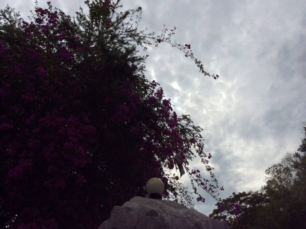 写真 2014-05-19 10 52 35 (1)
